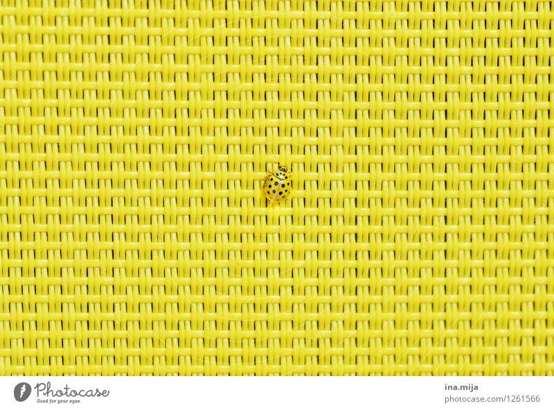 gut getarnt Tier Wildtier Käfer Marienkäfer 1 krabbeln gelb schwarz Vertrauen Sicherheit Schutz Geborgenheit Tierliebe Mittelpunkt Ferne klein Tarnung