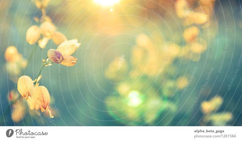sonnenbaden Pflanze Sommer Erholung Blume ruhig Frühling Blüte Wiese Gras Zufriedenheit Feld Wohlgefühl Duft harmonisch
