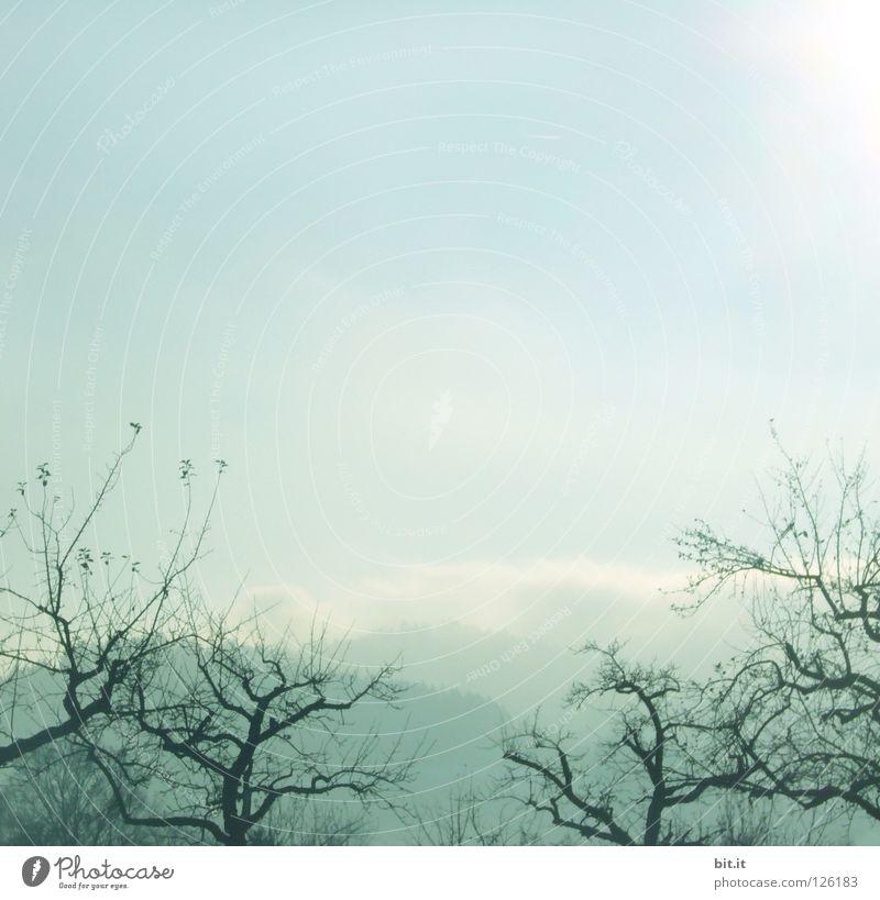 BOSCOP IN JAPAN Baum Nebel Himmel Winter kalt eigenwillig Gärtnerei Vordergrund Hintergrundbild weich zart verweht Sandverwehung krumm Tanne Wald Tentakel
