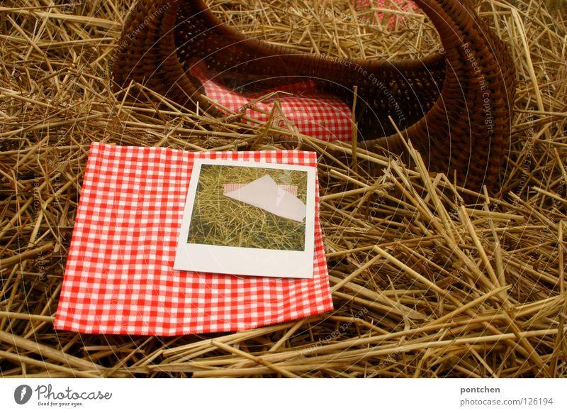 Korb und rot-weiß karierte Serviette und polaroid im Stroh Ferien & Urlaub & Reisen Ausflug Sommer Natur Herbst Nutzpflanze Idylle Pause Heu Landleben ländlich