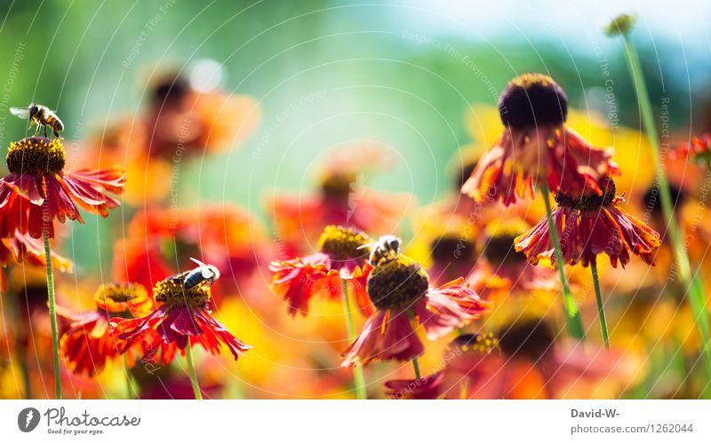 Bienenparadies Natur Pflanze Sommer Sonne Blume rot Landschaft Tier Umwelt Frühling Blüte Garten fliegen Arbeit & Erwerbstätigkeit Park Wetter