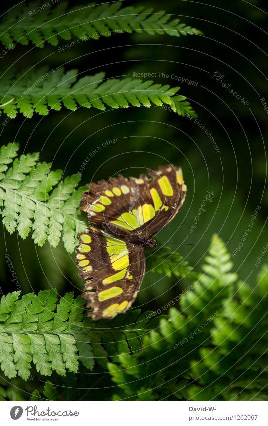 green butterfly Natur Pflanze schön grün Sommer Erholung Tier Wald Park elegant warten Flügel Schönes Wetter zart entdecken Insekt