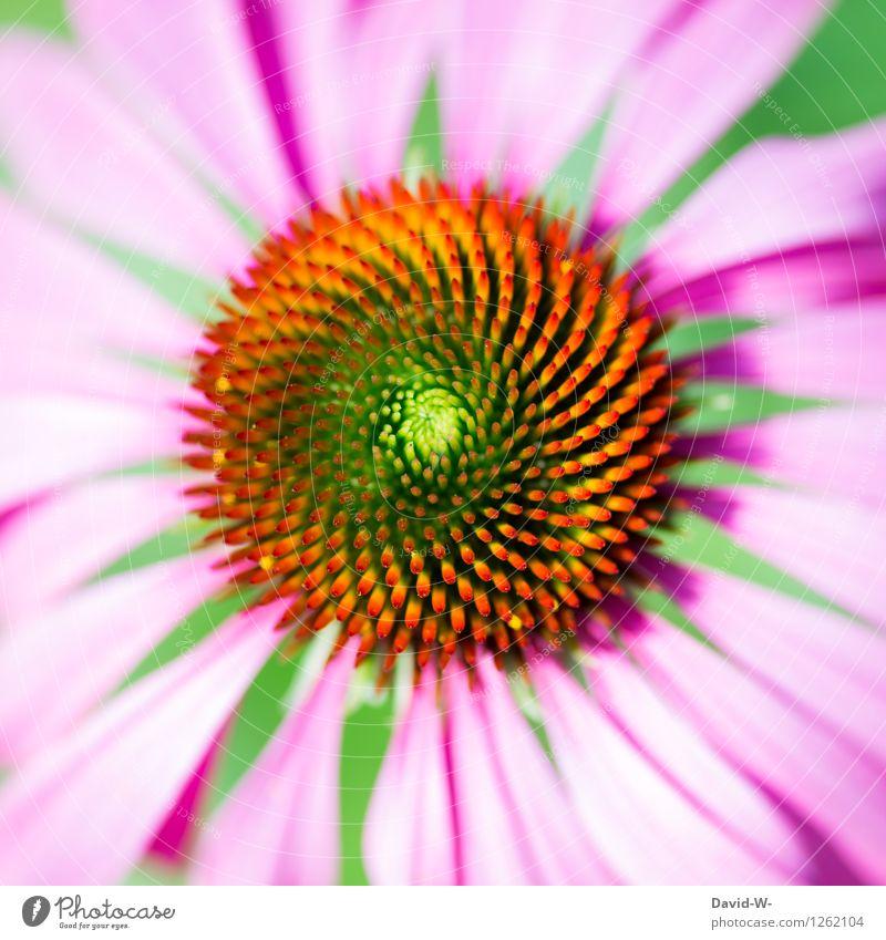 fast perfekt Natur Pflanze schön Sommer Blume Landschaft Umwelt Blüte Liebe Frühling natürlich Garten rosa träumen elegant Geburtstag