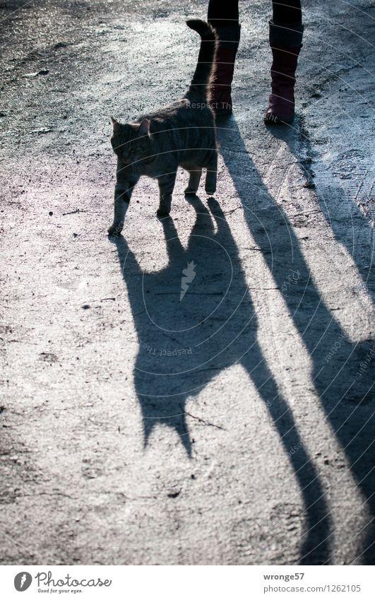 Schattenwesen Mensch feminin Frau Erwachsene 1 Tier Haustier Katze schwarzer Kater dick dunkel grau Hauskatze Gegenlicht Silhouette begegnen Farbfoto