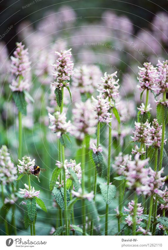 Sammelstelle Natur Pflanze Sommer Blume Landschaft Tier Umwelt Frühling Arbeit & Erwerbstätigkeit Park Ordnung Idylle Flügel Klima Schönes Wetter violett