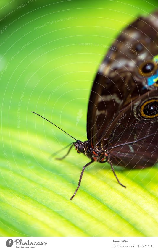 Hidden Beauty Umwelt Natur Landschaft Pflanze Tier Frühling Sommer Schönes Wetter Blatt Grünpflanze Park Wiese Urwald Nutztier Schmetterling 1 beobachten