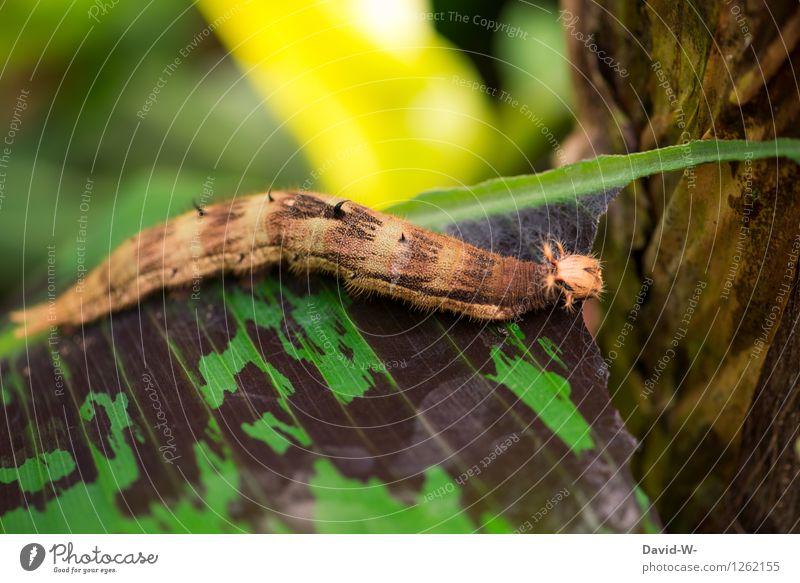 Raupe Nimmersatt Natur Pflanze schön grün Sommer Blatt Tier Wald Essen Schönes Wetter lecker entdecken Fell Schmetterling exotisch Urwald