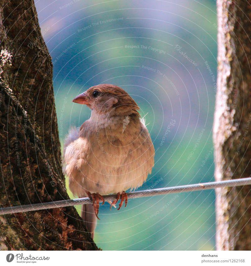 Lieber nen Spatz... Zoo Tier Baum Sträucher Garten Wildtier Vogel 1 Drahtseil sitzen frei natürlich niedlich wild blau braun grün Vertrauen Sicherheit ruhig