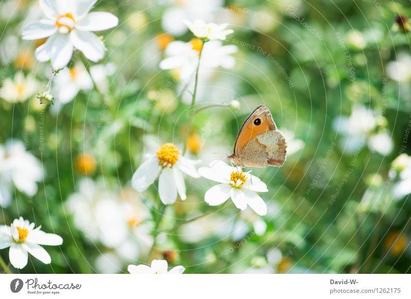 Sommerbote Ferien & Urlaub & Reisen Umwelt Natur Landschaft Pflanze Tier Sonne Frühling Schönes Wetter Blume Blüte Garten Nutztier Schmetterling 1 Blühend Duft
