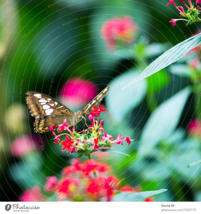 Sommerbote Umwelt Natur Pflanze Tier Sonnenlicht Frühling Schönes Wetter Blume Blatt Blüte Grünpflanze Garten Park Schmetterling Flügel Zoo 1 beobachten Blühend