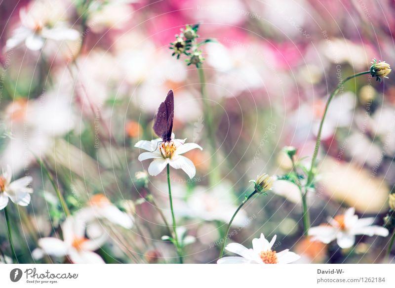 Schmetterling Kunst Künstler Maler Umwelt Natur Landschaft Frühling Sommer Schönes Wetter Pflanze Blume Blüte beobachten Blühend Duft fantastisch Gefühle