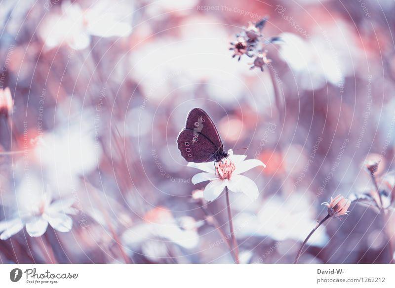 Speedorado | Lieblingsplatz Umwelt Natur Landschaft Pflanze Tier Frühling Sommer Schönes Wetter Nebel Blume Blüte Grünpflanze Wiese Schmetterling Flügel 1