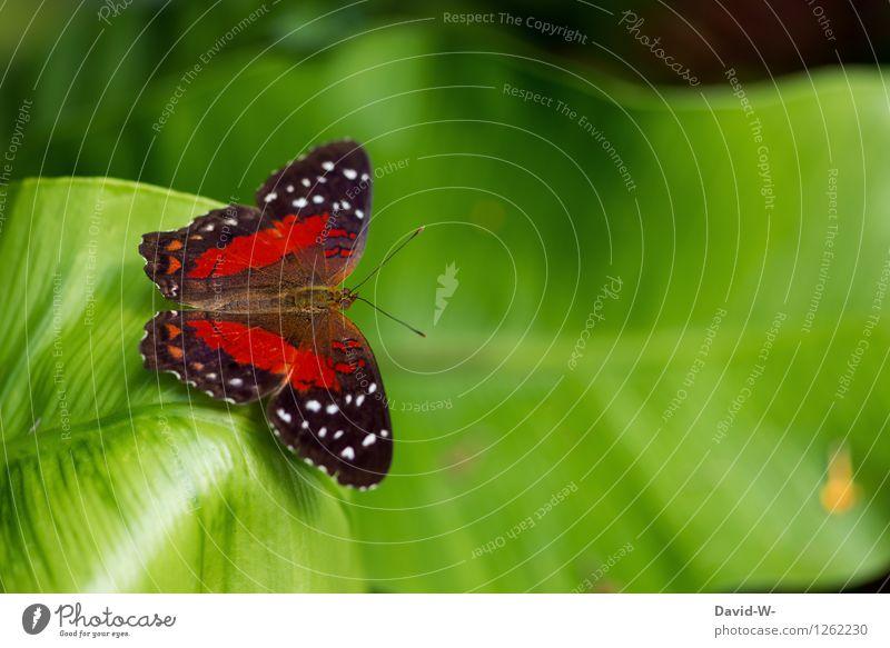 Schmetterling Natur Pflanze schön grün Sommer rot Blatt Tier Umwelt Frühling Wiese Garten Park sitzen Flügel Insekt