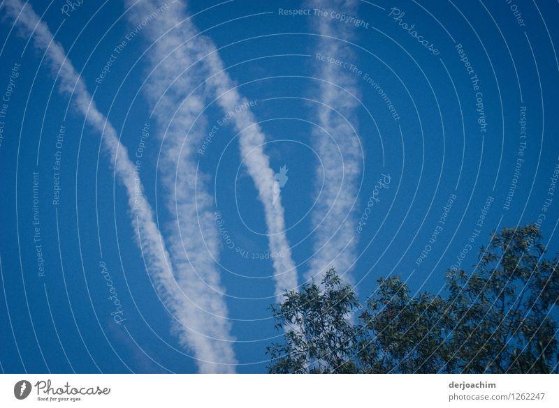 Himmels W Freude harmonisch Sommer Wolkenloser Himmel Schönes Wetter Baum Park Queensland Australien Kleinstadt Luftverkehr Streifen Wasser beobachten entdecken
