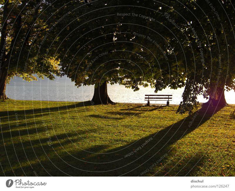 Sonnenuntergang am Bodensee Parkbank Baum Wiese grün ruhig Erholung Romantik lange schatten Wasser