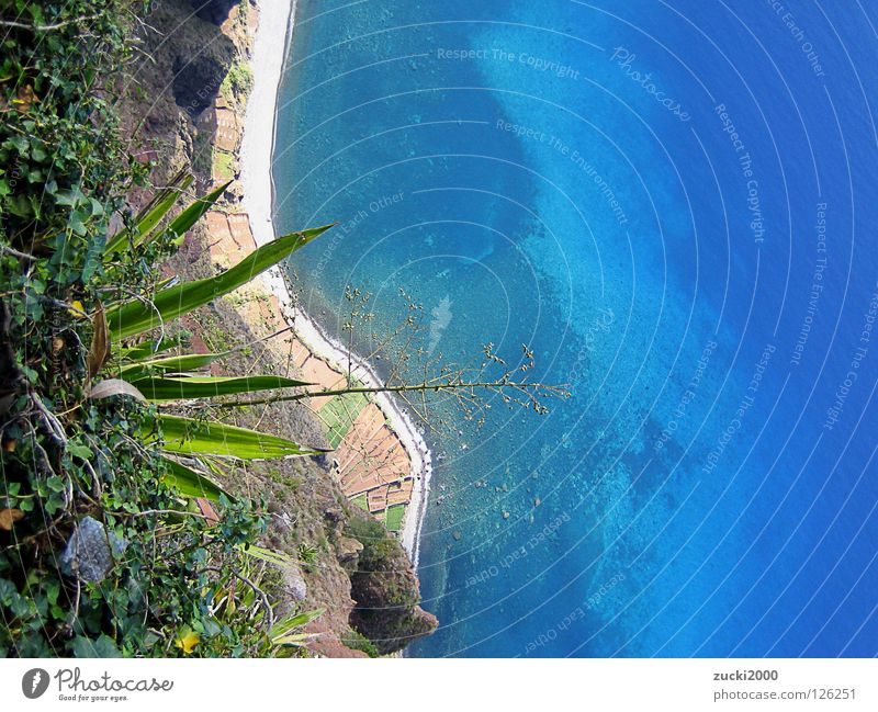 Blaues Glück Madeira Küste Meer Strand Klippe Klarheit Physik Kaktus Wasser Uraub Wärme Pflanze karg süße Freundin