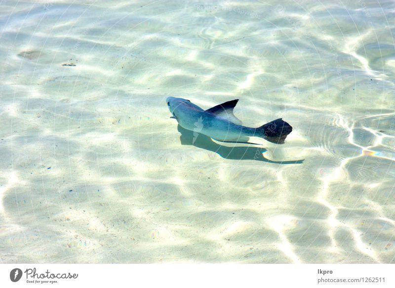 wenig Fisch Isla Contoy in Mexiko schön Erholung Tourismus Freiheit Strand Meer Natur Tier Sand Schönes Wetter Felsen Küste Stein Tropfen wild blau braun weiß