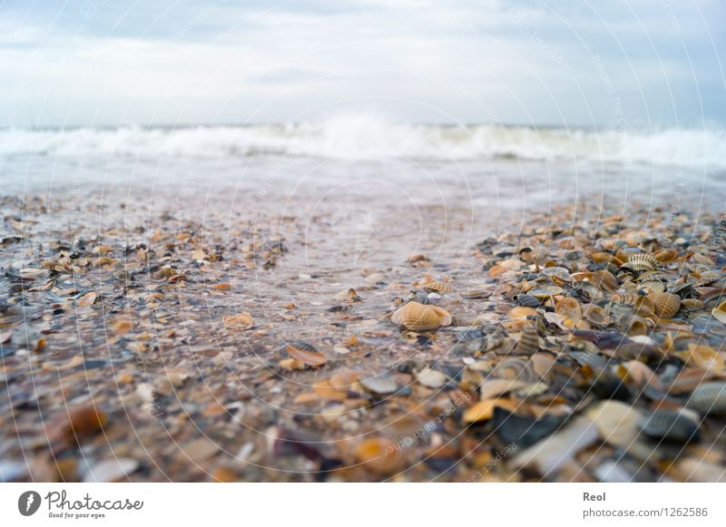 Brandung Natur Landschaft Urelemente Sand Wasser Himmel Wolken Sommer schlechtes Wetter Muschel Muschelsplitter Muschelschale Muschelsand Wellen Küste Strand