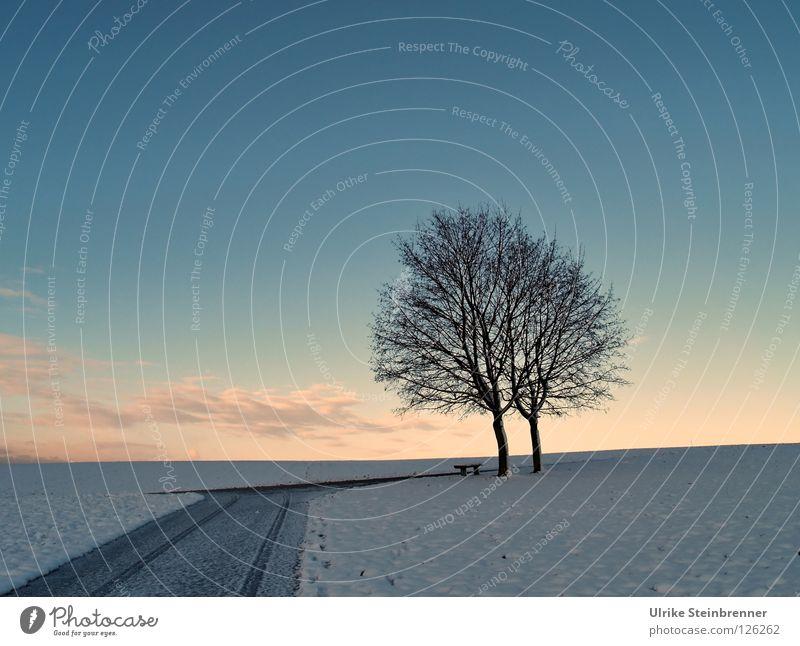 Alleinstehendes Baumpaar im Winter am Morgen Schnee Himmel Wolken Eis Frost Wiese Feld Straße Wege & Pfade Zusammensein kalt blau rosa weiß
