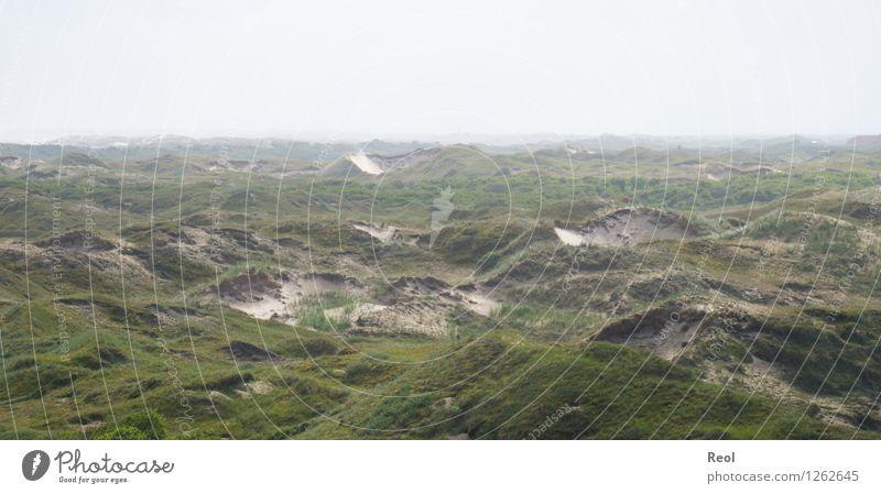 Dünen Natur Landschaft Urelemente Sand Himmel Sommer Hügel Küste Nordsee Insel Norderney Ostfriesische Inseln Dünengras wild grün ruhig Fernweh Dunst Stranddüne