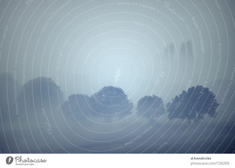 Herbstmorgen Baum Berge u. Gebirge Feld Nebel trist Alpen