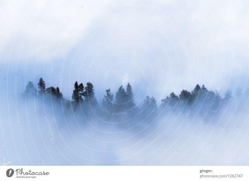 Kuschelwolken I Himmel Natur blau Pflanze grün weiß Baum Landschaft Wolken dunkel Wald Berge u. Gebirge Umwelt Frühling hell Wetter