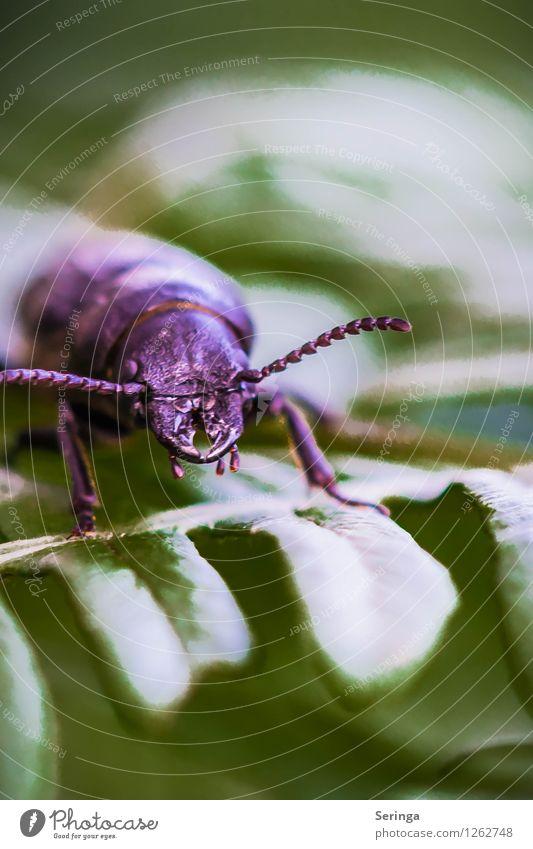 Erstmal Pause Natur Landschaft Pflanze Tier Garten Park Wiese Käfer Tiergesicht 1 krabbeln Insekt Farbfoto mehrfarbig Außenaufnahme Nahaufnahme Detailaufnahme