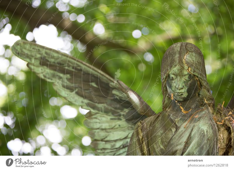 broken angel 2/2 Kopf 1 Mensch Skulptur Sonne Wald Haare & Frisuren Engel Gefühle Trauer Tod Friedhof Hamburg Ohlsdorfer Friedhof Farbfoto Gedeckte Farben