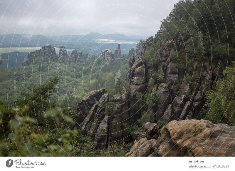 Elbsandstein grün Wald kalt Berge u. Gebirge Wiese grau Nebel wandern Sandstein Wolkenhimmel Elbsandsteingebirge Sächsische Schweiz
