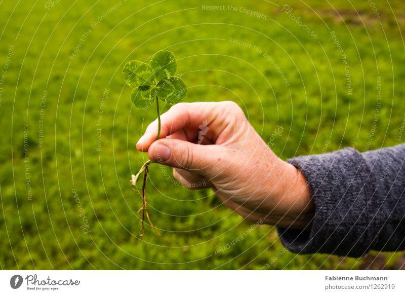 Glückwunsch Pflanze grün Hand Blatt Herbst Wiese grau Finger festhalten Wunsch zeigen Daumen Glückwünsche Kleeblatt