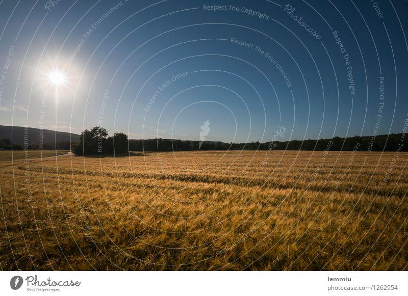 Kornfeld Ausflug Landschaft Pflanze Himmel Wolkenloser Himmel Horizont Sonne Sonnenaufgang Sonnenuntergang Sonnenlicht Sommer Nutzpflanze Feld Unendlichkeit