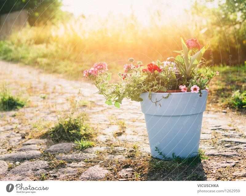 Blumentopf mit Gartenblumen Natur Pflanze Sommer Landschaft Herbst Wege & Pfade Gras Stil Hintergrundbild Stein Design Dekoration & Verzierung Schönes Wetter