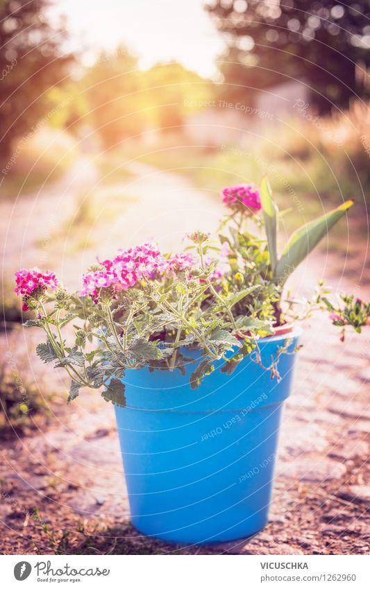 Blumen in blauem Blumentopf. Garten Dekoration Natur blau Pflanze Sommer Baum Blume Herbst Wege & Pfade Stil Hintergrundbild Garten rosa Design Dekoration & Verzierung Schönes Wetter Terrasse