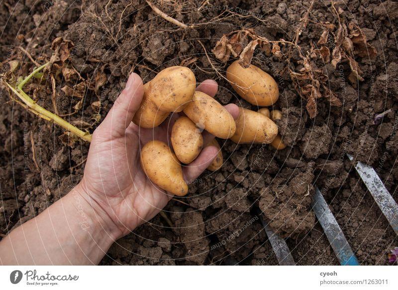 back to the roots II Natur Hand Garten Zeit Arbeit & Erwerbstätigkeit Zufriedenheit Feld Wachstum frisch Idylle Erde Erfolg Armut Wandel & Veränderung