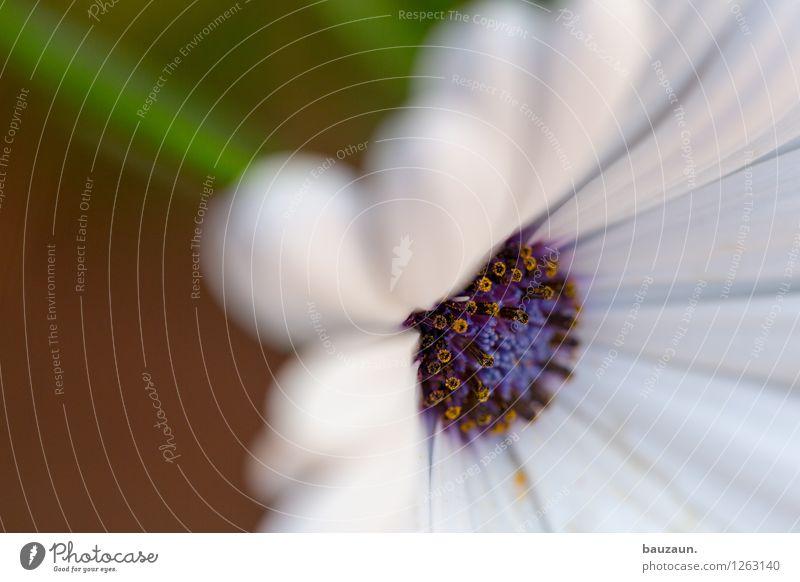 . Natur Pflanze grün schön Sommer weiß Blume Freude Leben Blüte Frühling natürlich Stil Design elegant ästhetisch