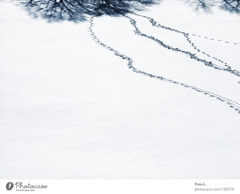 Spuren Winter Baum Sträucher Fußspur Fußballplatz St. Pauli Schneedecke frisch Schneeflocke Sauberkeit rein Neuschnee Verkehrswege Schatten Irritation