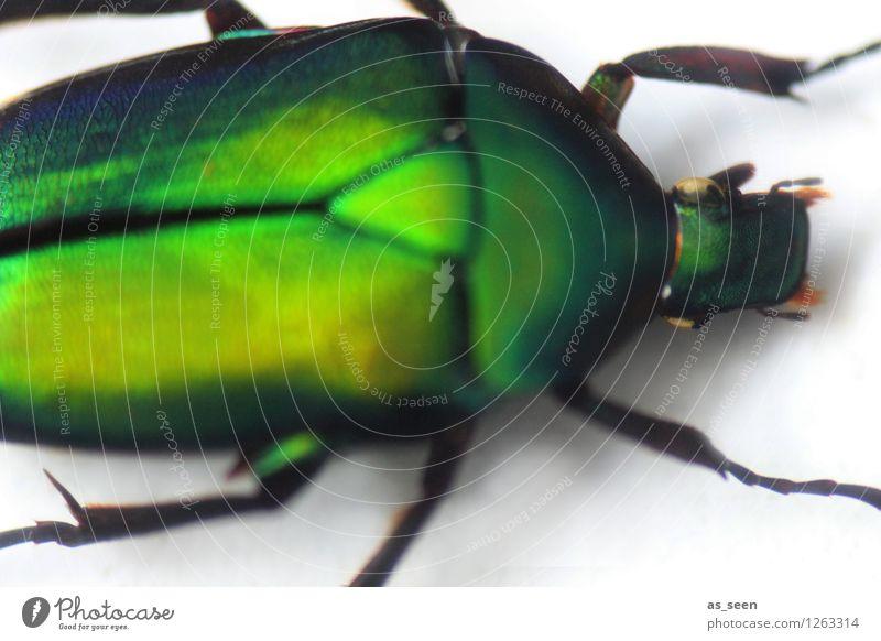 Grüne Metamorphose Natur grün Farbe Tier Bewegung natürlich außergewöhnlich Mode Kopf glänzend Design leuchten ästhetisch Wandel & Veränderung nah Insekt