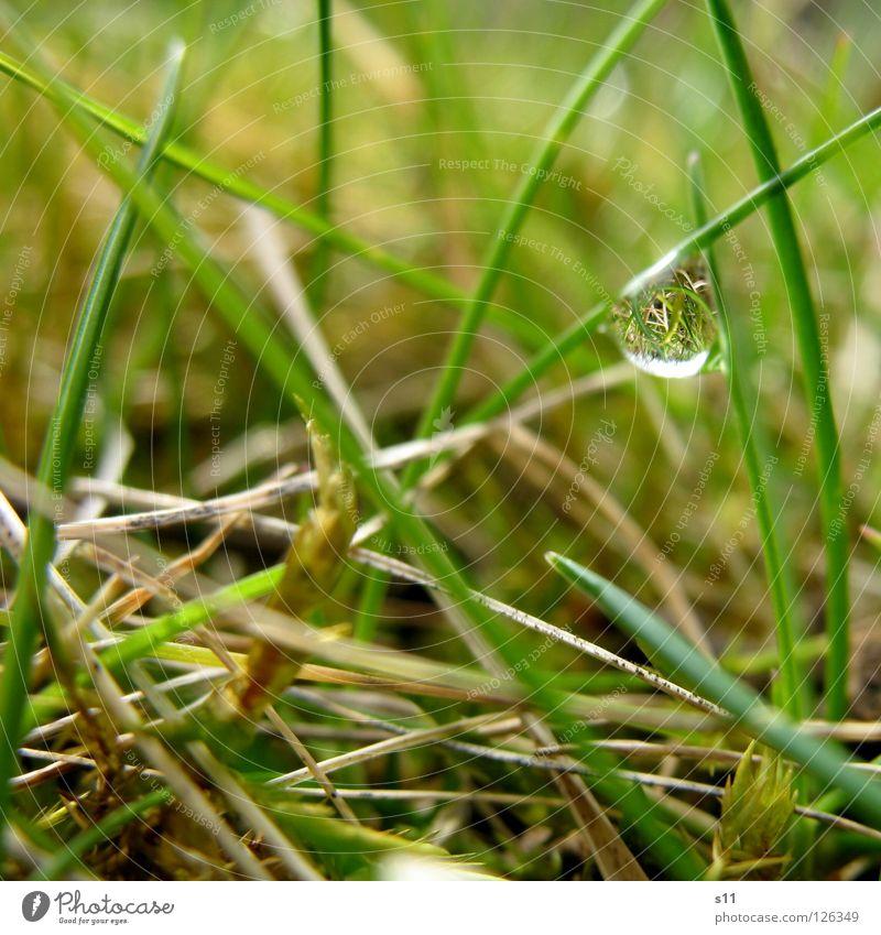 Kleine Verdrehte Welt Natur Pflanze grün Wasser Wiese Gras braun Wassertropfen Geschwindigkeit nass Vergänglichkeit Bodenbelag Boden Spiegel drehen beige