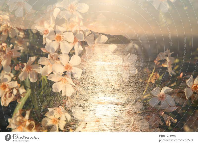 Blütenmeer Lifestyle Stil Design schön Körperpflege Wellness Leben harmonisch Freizeit & Hobby Ferien & Urlaub & Reisen Tourismus Wellen Garten