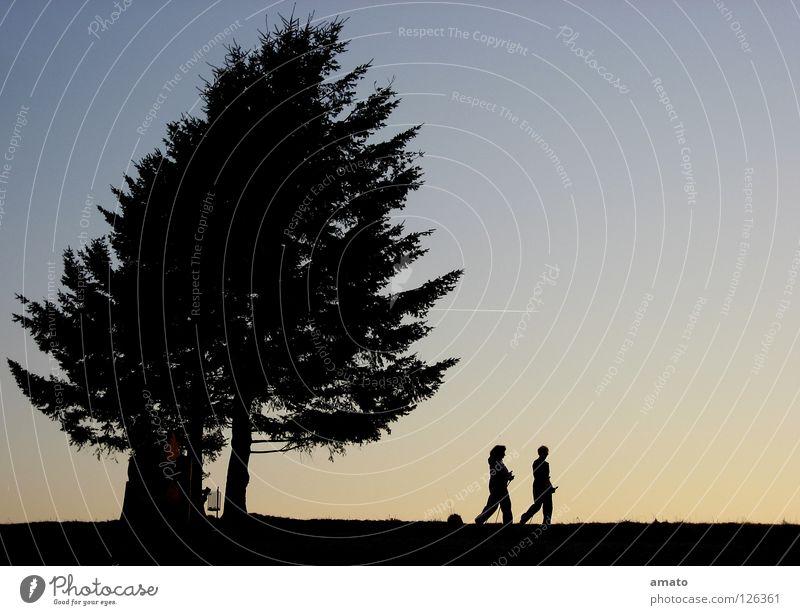 Walking Baum Zusammensein Nordic Walking Abenddämmerung ruhig Silhouette Spielen Redseligkeit Natur himmelbau