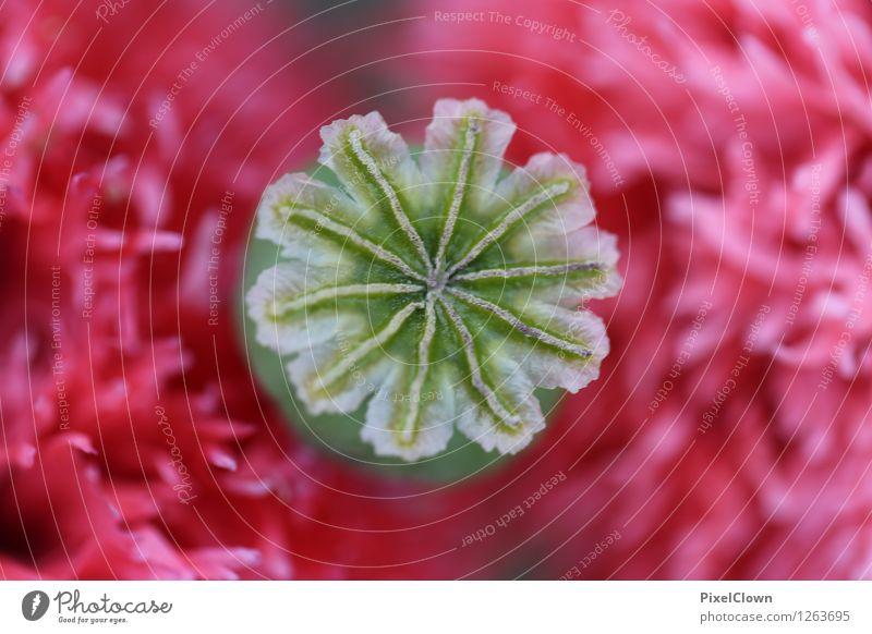 Stempel aufgesetzt Pflanze schön Blume rot Erotik Blatt Leben Liebe Blüte Gefühle Wiese Stil Glück Garten Lifestyle Kunst