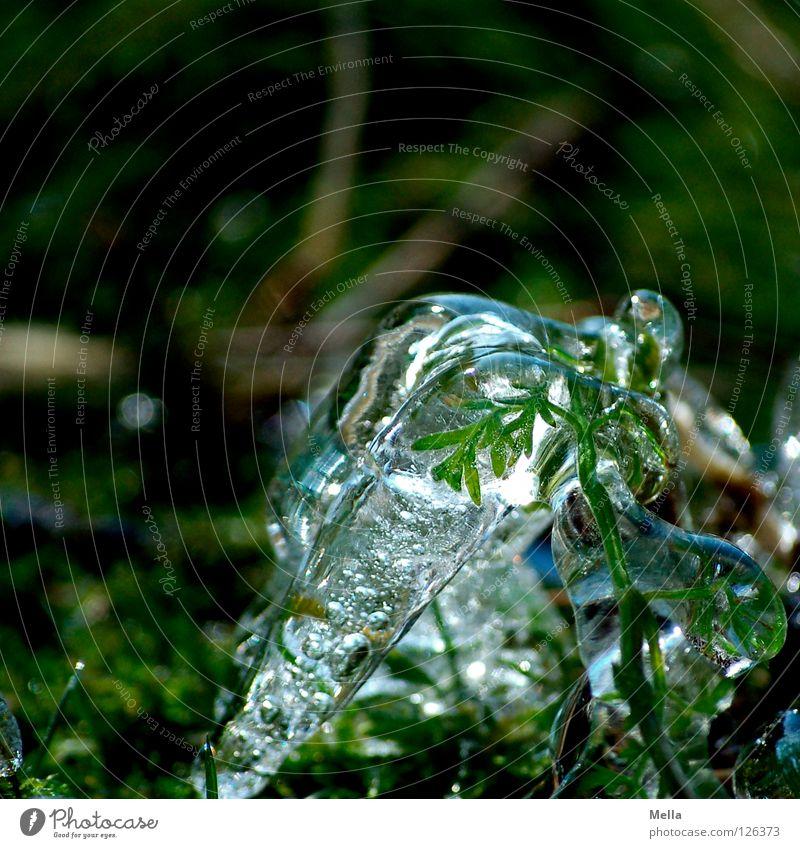 Frühlingseis IV Natur grün Pflanze Winter kalt Gras Frühling Eis Umwelt nass frisch Wachstum Frost rein gefroren nachhaltig