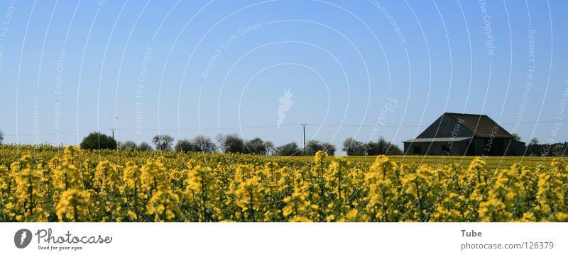 Alles Gute Zum Frauentag! Himmel Natur grün Sommer Pflanze Haus Landschaft Ferne gelb Umwelt Luft Feld Sauberkeit Landwirtschaft rein Bauernhof