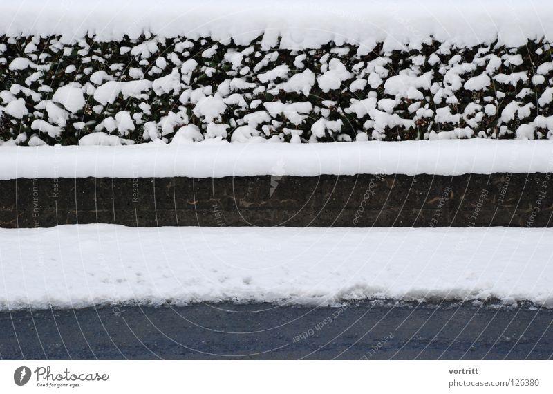 bahnen Mauer Pflanze Beton Schnee schwarz weiß sehr wenige grau Winter schmelzen kalt Kunst Wechseln Straße gebsch bedecken reduzieren einfach karg