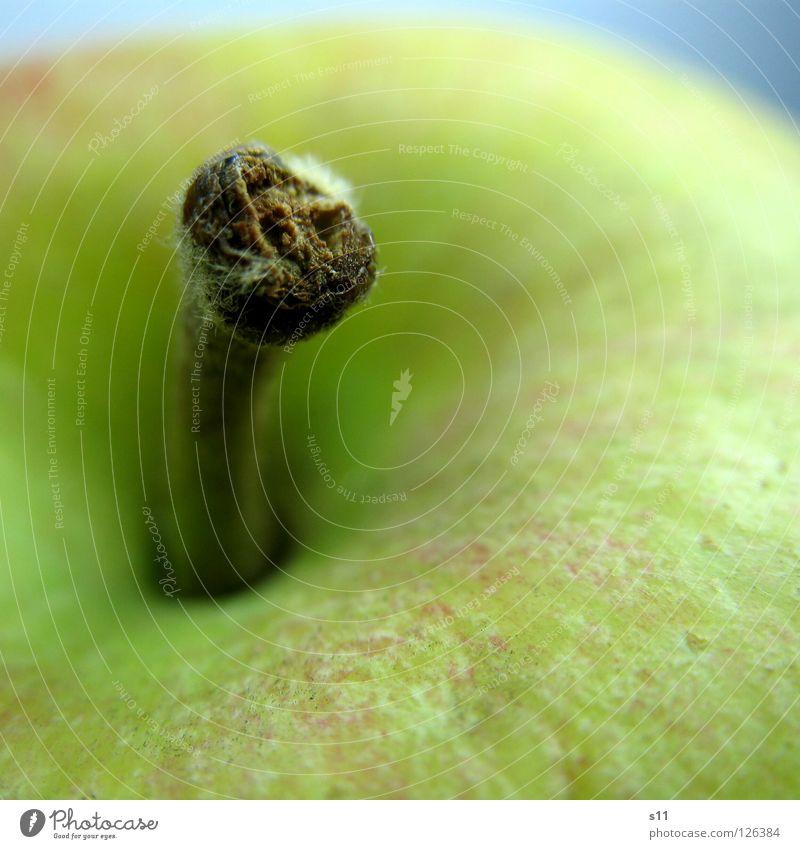 Apple III knackig saftig süß rund Gesundheit Vitamin rot gelb grün Ernährung Fruchtzucker Makroaufnahme Nahaufnahme Wut Glätte Apfel Stengel Natur Anschnit Haut