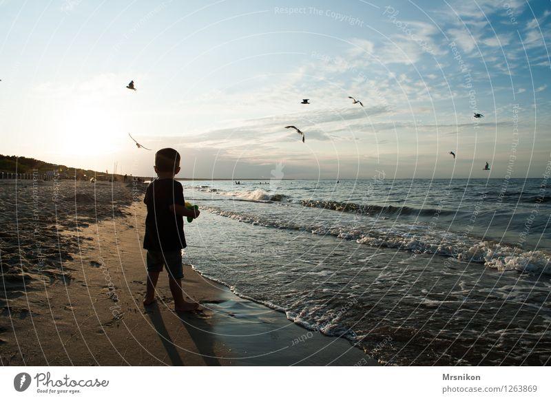 Der kleine Junge und das Meer Ferien & Urlaub & Reisen Abenteuer Ferne Sommerurlaub Strand Wellen Mensch Kind Kindheit 1 3-8 Jahre füttern Blick werfen Neugier