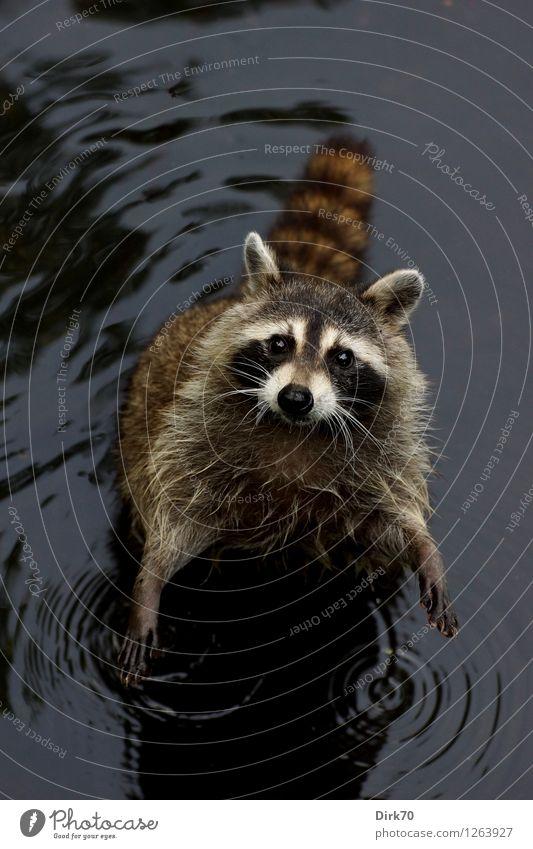 FEED ME! Natur Sommer Wasser weiß Tier schwarz Umwelt klein grau See braun Park Wildtier stehen warten nass