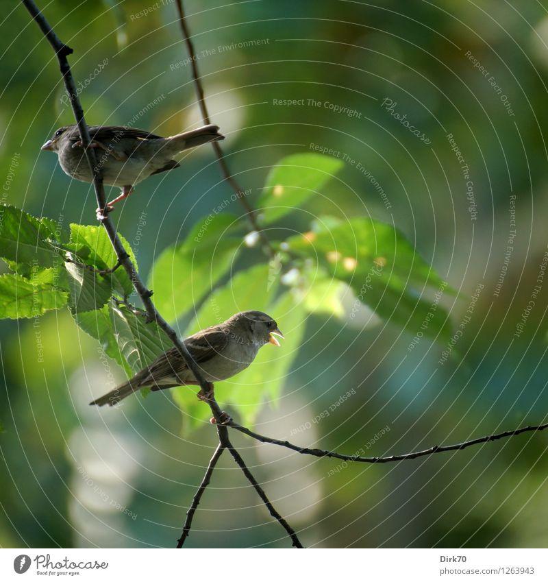 In allen Wipfeln ... Natur Sommer Schönes Wetter Baum Blatt Laubbaum Garten Park Wald New York City Manhattan USA Sehenswürdigkeit Central Park Tier Wildtier