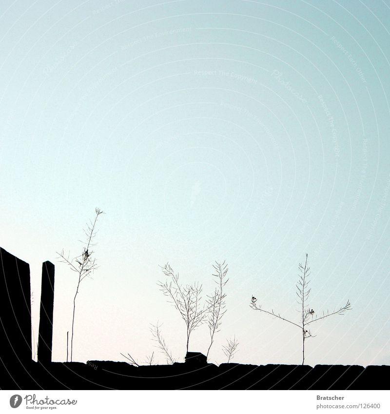 Secret Garden Natur Himmel ruhig Gras Garten Traurigkeit Trauer Wachstum Dach verfallen Verfall Ruine Schönes Wetter Abenddämmerung Blauer Himmel Windstille