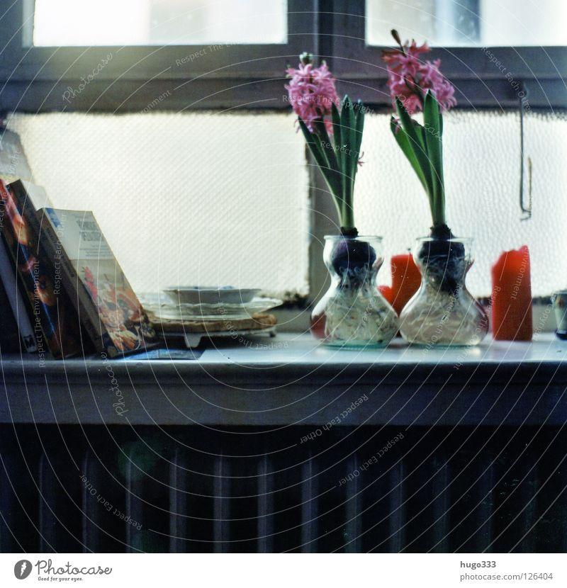 Anna's kitchen Blume grün rot Fenster Blüte 2 Buch Glas rosa Kerze Küche Blühend Teller Holzbrett Fensterscheibe